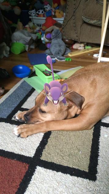 pokemon-go-photos rat-beats-dog