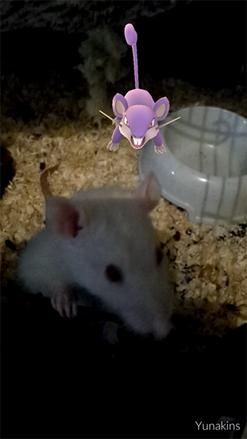 pokemon-go-photos real-and-fake-rats