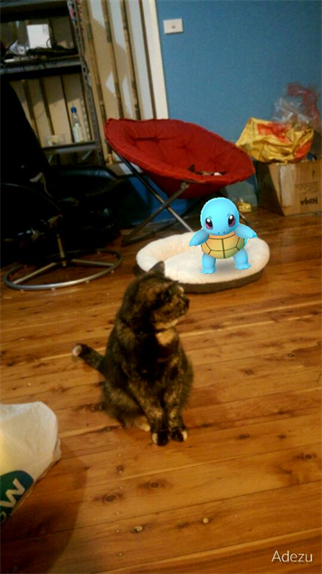 pokemon-go-photos squirtle-cat-bed