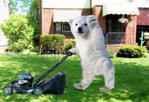 polar-bear-photoshop-battle polar-bear-photoshop-4