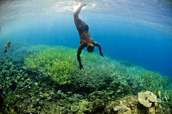 reefs coral-amazon-se-asia