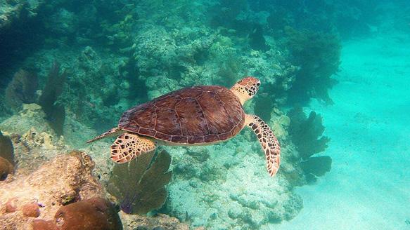 reefs key-west-florida-coral