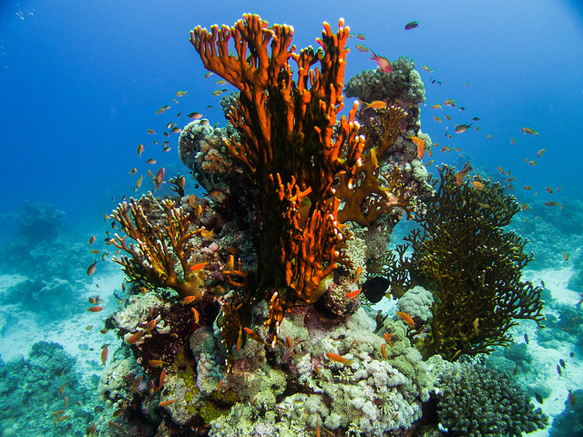 reefs red-sea-coral-reef-egypt
