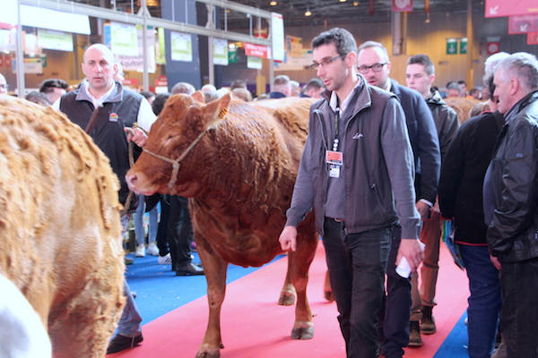 salon-dl-agriculture 2---cow-walking