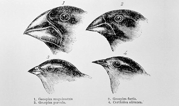 sci-illustration darwin
