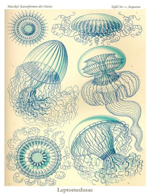 sci-illustration haeckel