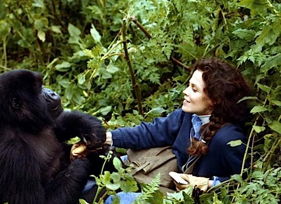 sigourney-weaver 08-weaver-gorillasinthemist