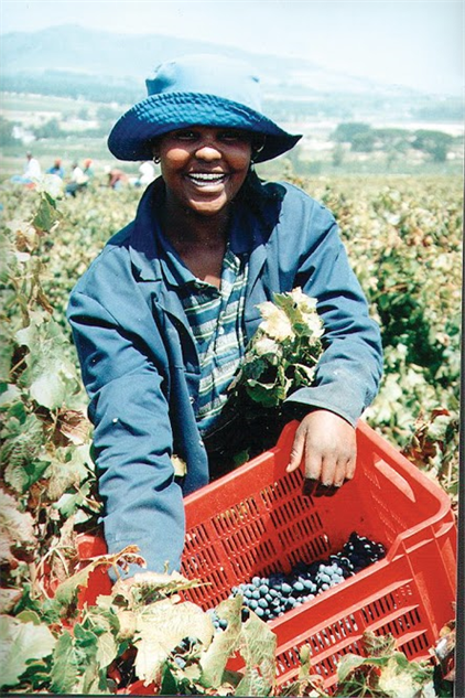 south-africa-wineries grape-picker