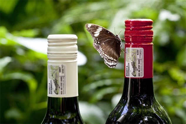south-africa-wineries hypolimnas-bolina-butterfly-with-bottle-of-wine-with-new-sea