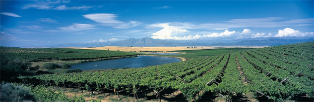 south-africa-wineries swartland-vineyards
