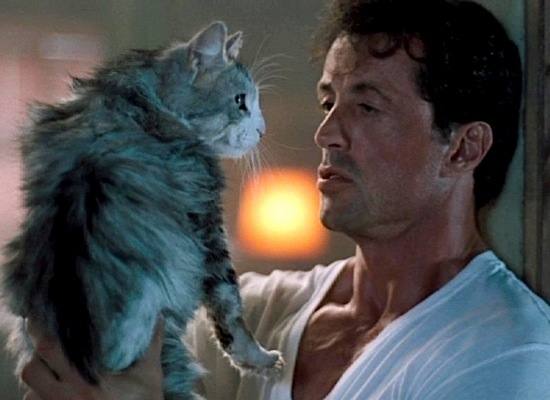 sylvester-stallone 19-stallone-thespecialist