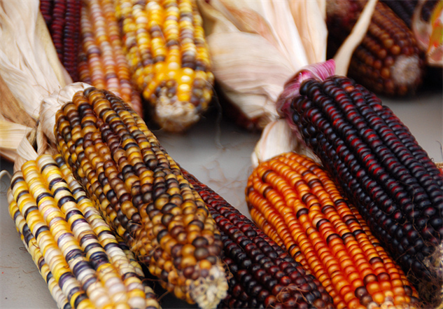 What  Foods Did The Pilgrims Eat On Thanksgiving