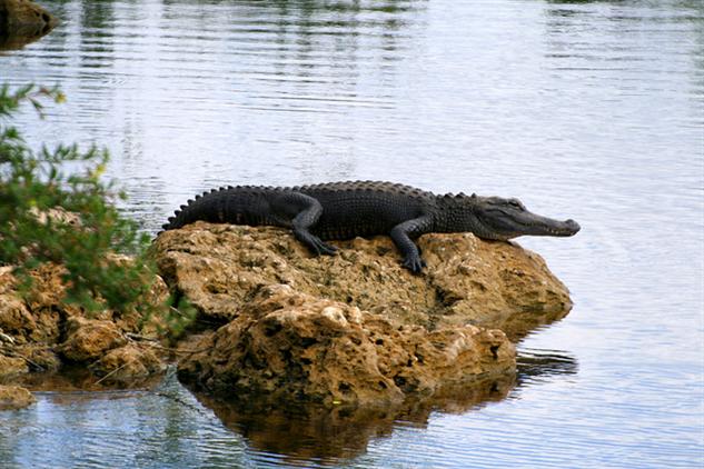 the-5-best-national-parks-for-wildlife-spotting everglades
