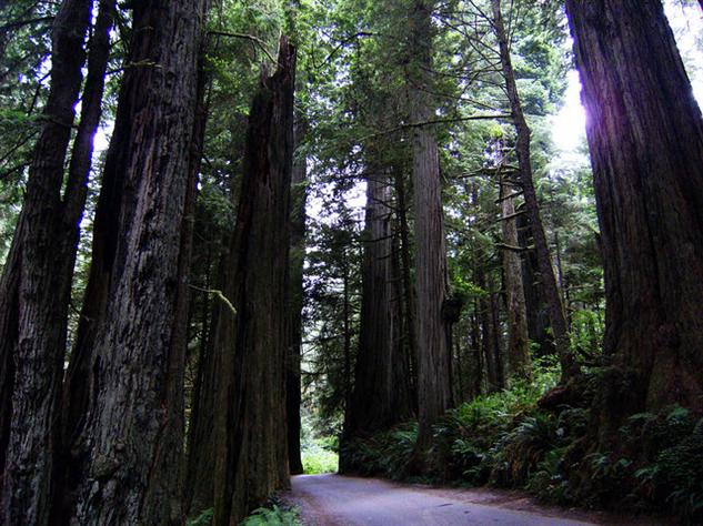 the-5-best-national-parks-for-wildlife-spotting redwood