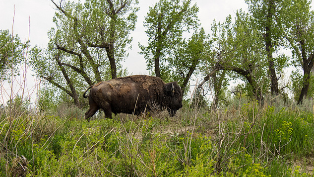 the-5-best-national-parks-for-wildlife-spotting theodorerooseveltmain