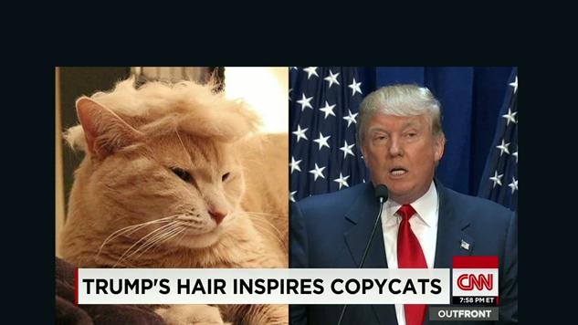 trump-memes 150714204025-moos-trump-your-cat-meme-erin-00000918-full-169