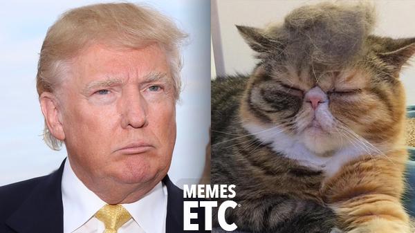 trump-memes trump-meme-cat-1