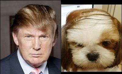 trump-memes tumblr-nt3rxzsuzz1udlprno1-500