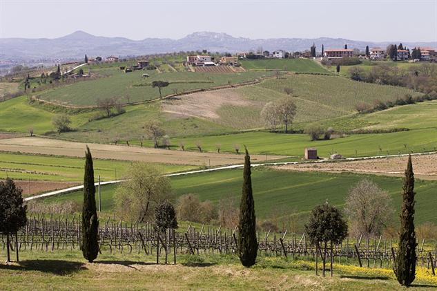 tuscany-wine panorama