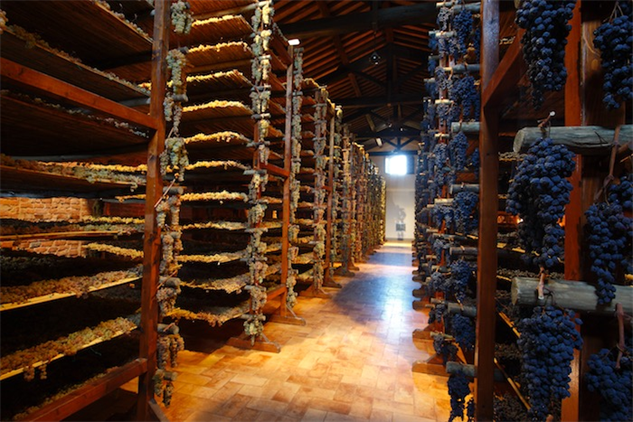 tuscany-wine sangiovese-grapes-before-they-are-pressed-for-sweet-wine