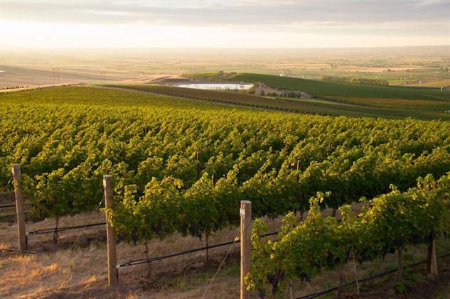washington-wine walla-walla-seven-hills-vineyard
