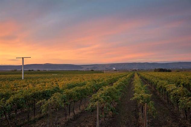 washington-wine yakima-valley-lewis-vineyard