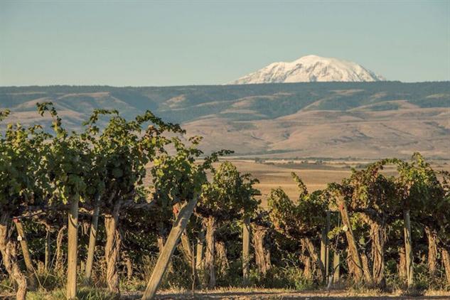 washington-wine yakima-valley-red-willow