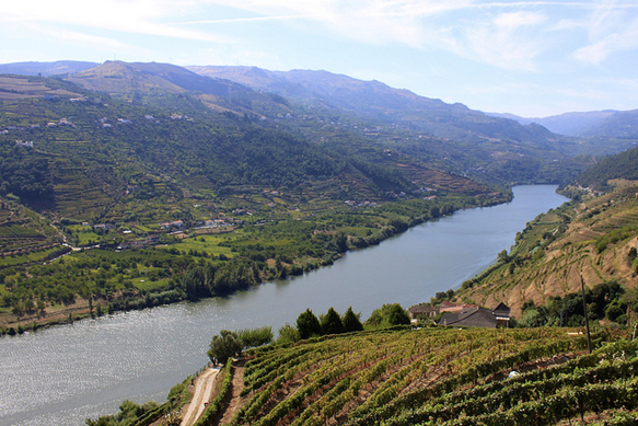 wine-regions douro-valley-alto-douro-wine-portugal