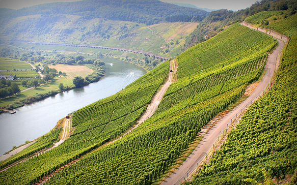 wine-regions germany-mosel-river-valley-wine