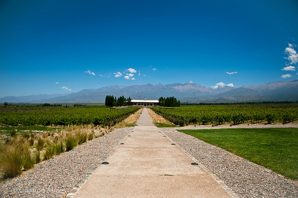 wine-regions mendoza-argentina-wine