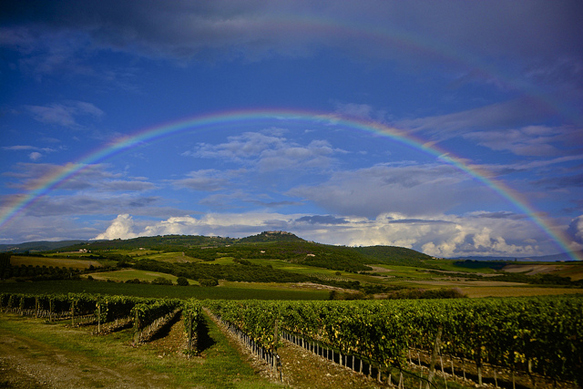 wine-regions vineyard-tuscany-italy